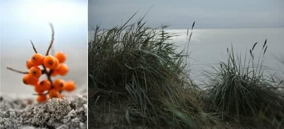 Erkältungs-Smoothie mit Sanddorn und Hagebutten