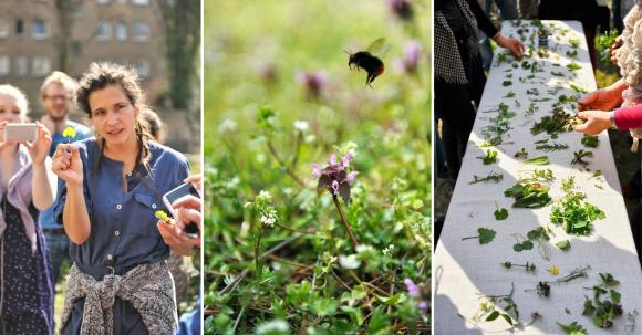 Wildkräuter bestimmen mit Natscha von Ganski bei GrüneSmoothies.de in Berlin Kreuzberg
