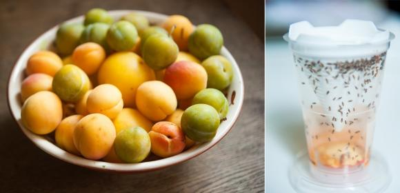 Collage: Rechts ein Obstteller und links eine Trapango Fruchtfliegenfalle